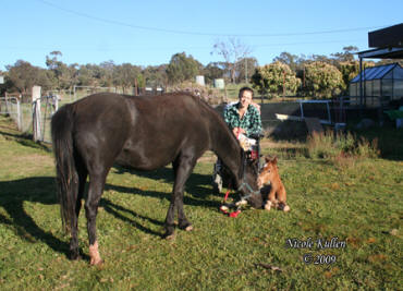 Nicole with Rosie & her gorgeous 2009 colt foal by Nikshar Alladin